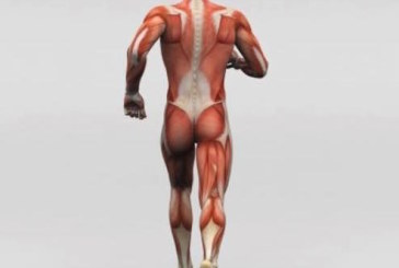 Fascia and All That You Need To Know About It