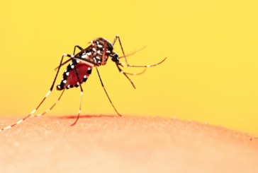 Top Ways to Protect Against Mosquito-Related Illnesses