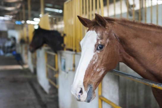 Keeping Your Horse Healthy Is Easier Than You Think